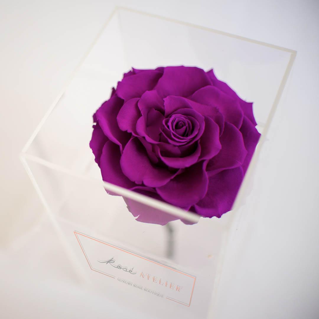 Caja de acrílico y Rosé Púrpura con Tallo